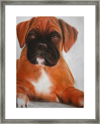 The Boxer Framed Print by Alan Brunt