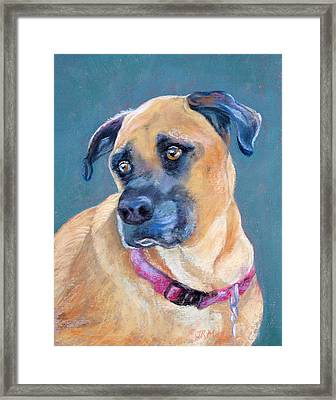 The Boxer Framed Print by Julie Maas