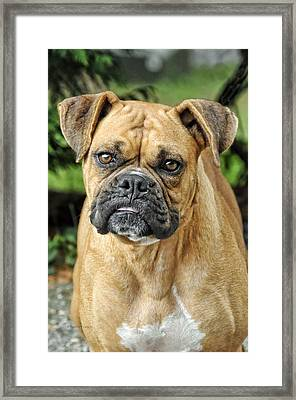 The Boxer Framed Print by Kenny Francis