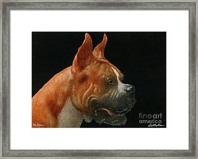 The Boxer... Framed Print by Will Bullas