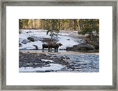 The Boys Are Back In Town Framed Print by Sandy Sisti