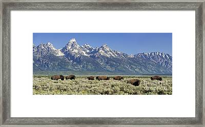 The Boys Club Of Grand Teton Framed Print by Sandra Bronstein