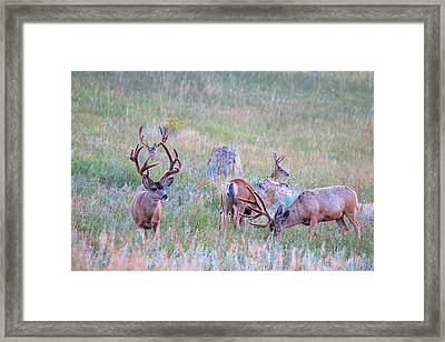 The Boys In The Band Framed Print by Jim Garrison