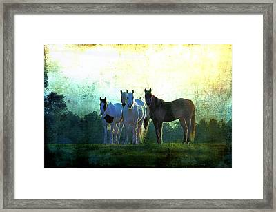 The Boys Framed Print by Jan Amiss Photography