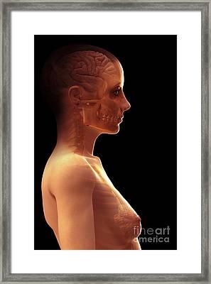 The Brain Female Framed Print