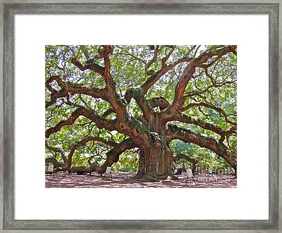 The Branches Of Life Framed Print