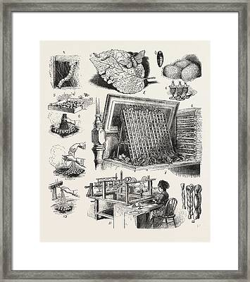 The Brazilian Silk Worm Exhibit, Philadelphia Exhibition Framed Print by Brazilian School
