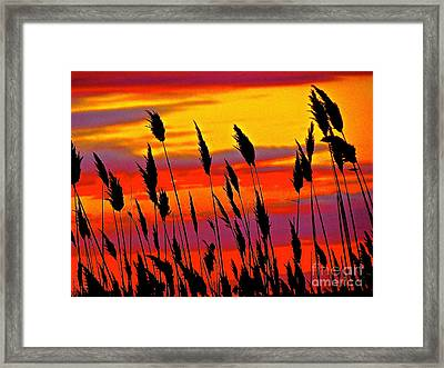 The Breeze Framed Print by Q's House of Art ArtandFinePhotography
