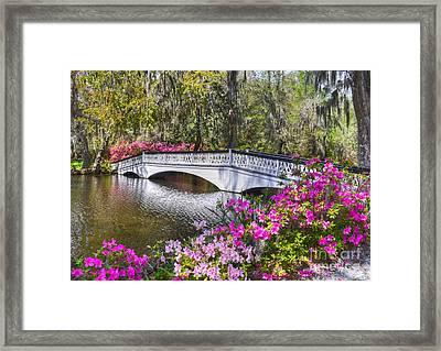 The Bridge At Magnolia Plantation Framed Print