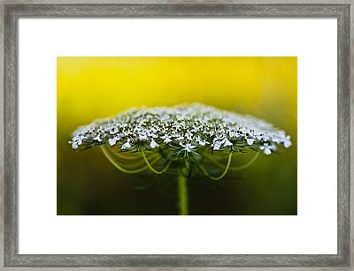 The Bright Side Of Life Framed Print