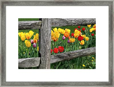 The Brighter Side Framed Print by Diana Angstadt