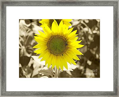 The Brightest In The Bunch Framed Print
