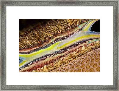 The Brightly Colored Mantle And Rows Framed Print