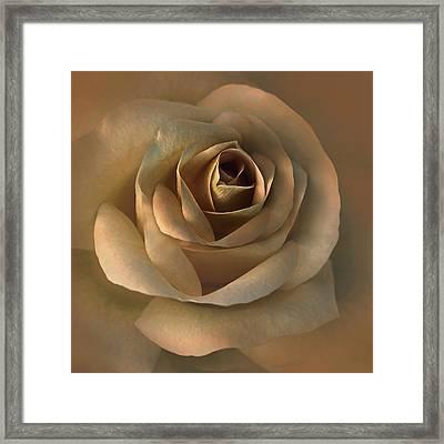 The Bronze Rose Flower Framed Print by Jennie Marie Schell