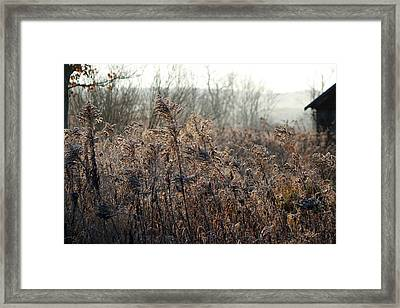 The Brown Side Of Winter Framed Print