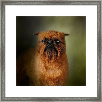 The Brussels Griffon Framed Print by Jai Johnson