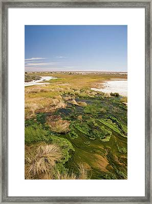 The Bubbler Mound Spring, Oodnadatta Framed Print by David Wall