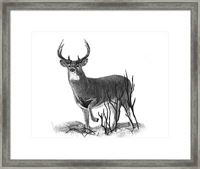 The Buck Framed Print by Bobby Shaw