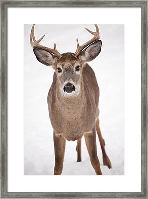 The Buck Stops Here Framed Print by Karol Livote