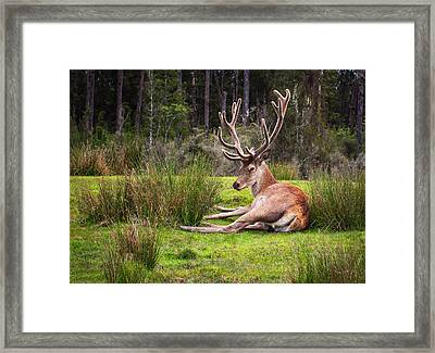 The Buck Stops Here... Framed Print