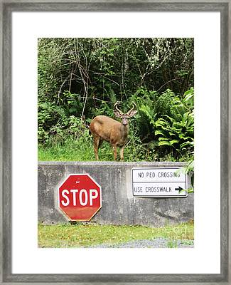 The Buck Stops Here Framed Print by Kym Backland