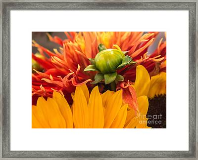 The Bud Framed Print