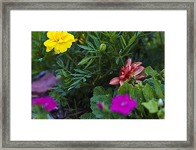 The Bud Framed Print by Robert Culver