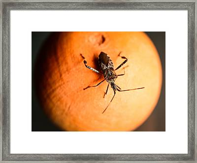 The Bug Framed Print by Marco Oliveira