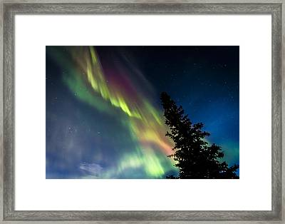 The Burning Tree 2 Framed Print by Kyle Lavey