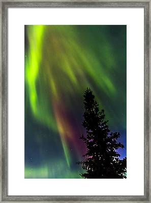 The Burning Tree Framed Print by Kyle Lavey