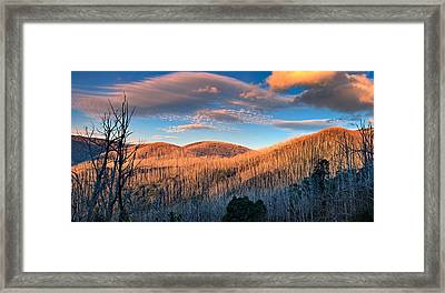 The Burnt Forest Framed Print by Mark Lucey
