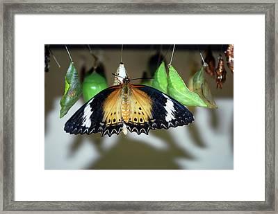 The Butterfly Farm, Quartier D'orleans Framed Print