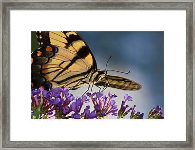 The Butterfly Framed Print by Lori Tambakis