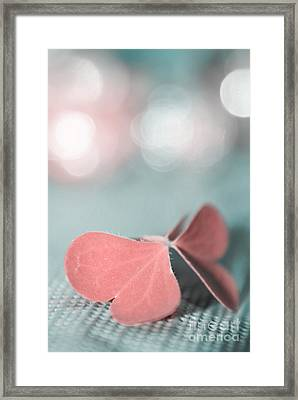 The Butterfly P02b Framed Print by Aimelle