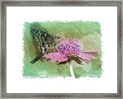 The Butterfly Visitor Framed Print by Carol Groenen