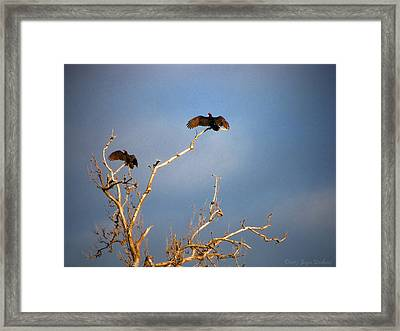 The Buzzard Roost Framed Print by Joyce Dickens