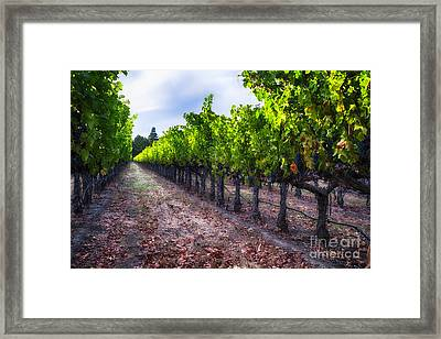 The Cabernet Is Ready Framed Print by George Oze