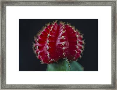 The Cactus Cacti In Red Framed Print by David Haskett