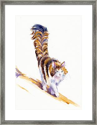 The Calico Cat That Walked By Himself Framed Print