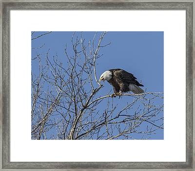 The Call Of The Wild And Free Framed Print