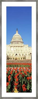 The Capitol & Tulip Garden, Washington Framed Print