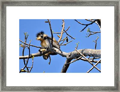 The Capped One Framed Print