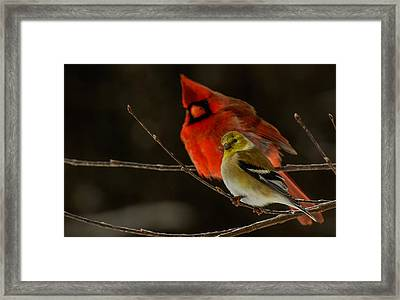 The Cardinal And The Goldfinch Framed Print