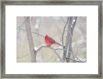 The Cardinal Framed Print by Kay Pickens