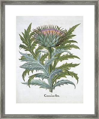 The Cardoon, From The Hortus Framed Print by German School