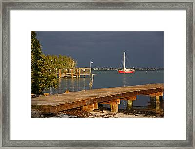 The Casual Observer Framed Print by HH Photography of Florida