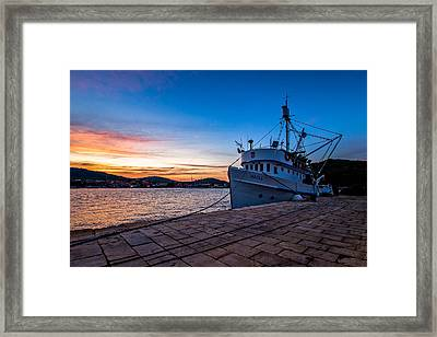 The Cat Framed Print by Davorin Mance