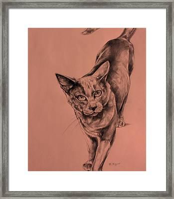 The Cat  Framed Print by Derrick Higgins