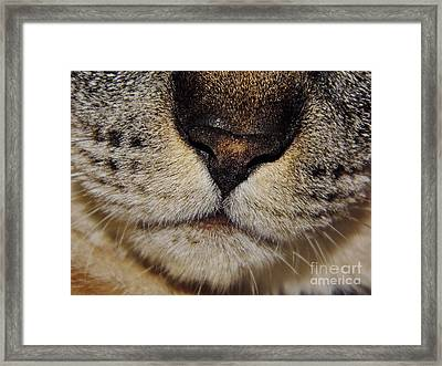 The - Cat - Nose Framed Print