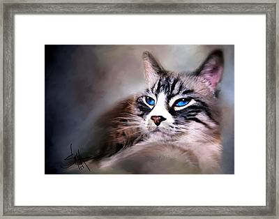 The Cat Framed Print by Robert Smith